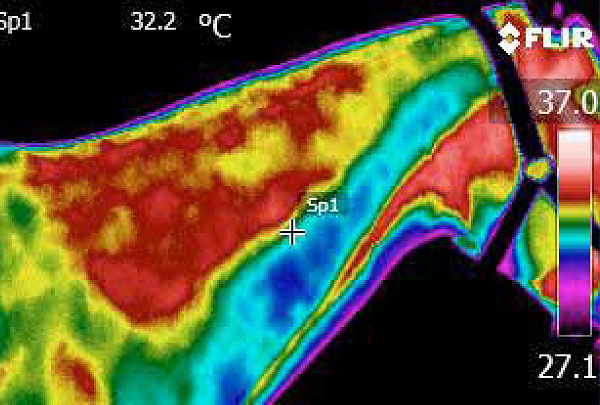 Veterinary Thermography